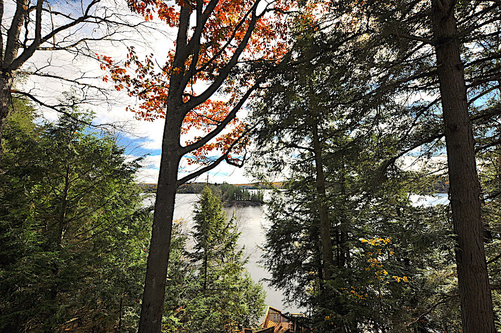 Haliburton Cottage Kennisis Lake Evergreen Terrace - View from cottage