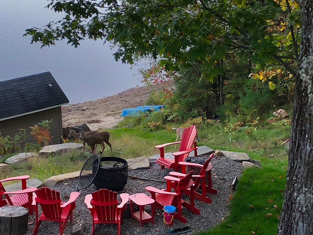 3b Fire-pit-view-to-the-sand-beach---and-a-couple-of-deer-for-fun