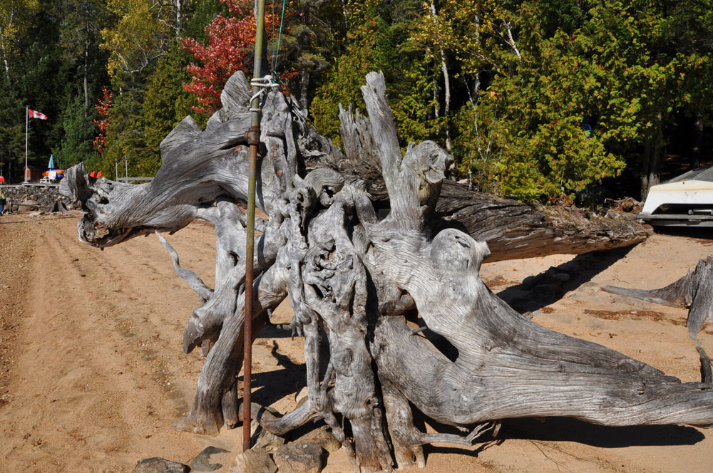 15-Driftwood-in-the-Fall---Summer-water-levels-are-at-the-tree-line